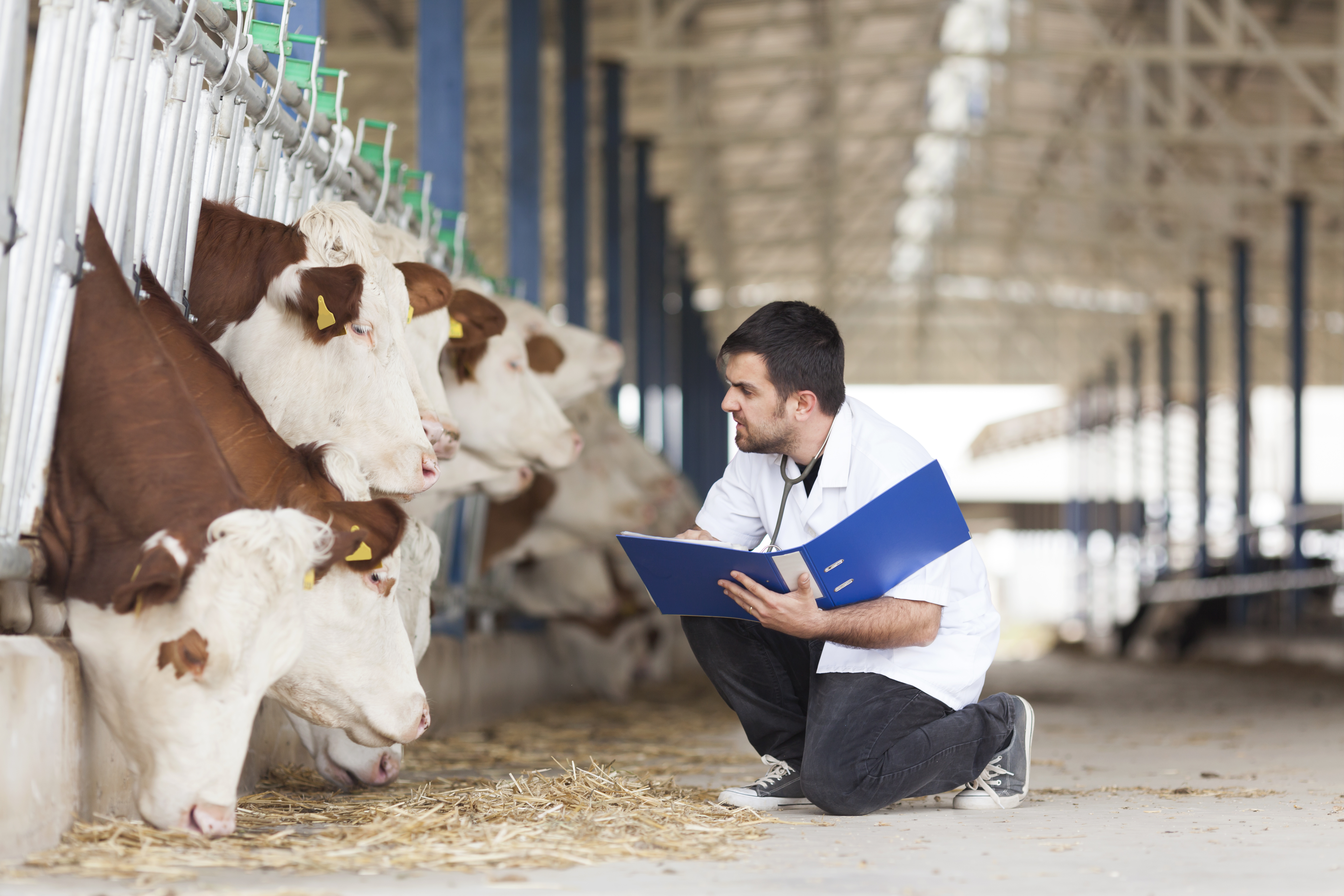 Farm antibiotic sales continue to fall across Europe and United Kingdom