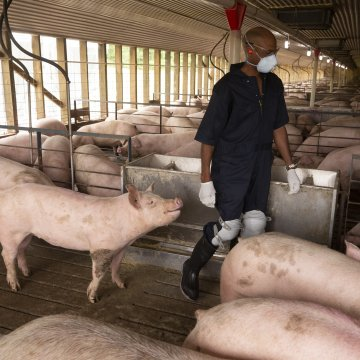 WHAT THE PORK INDUSTRY LEARNED FROM THE CORONAVIRUS DEBACLE